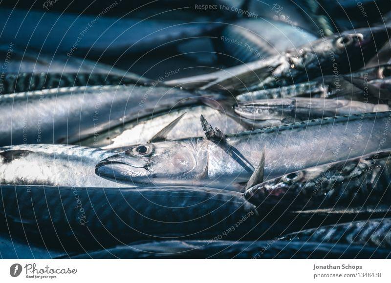 Fischers Fritze fischt frische Fische III Lebensmittel Fleisch Ernährung Mittagessen Abendessen Festessen Bioprodukte Klimawandel Totes Tier Tiergruppe Schwarm