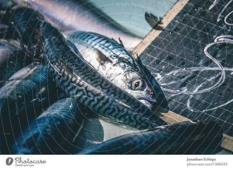 Fischers Fritze fischt frische Fische V Umwelt Tier Tiergruppe blau Tod schuldig Völlerei gefräßig verschwenden Fischereiwirtschaft verkaufen töten Hafen eng