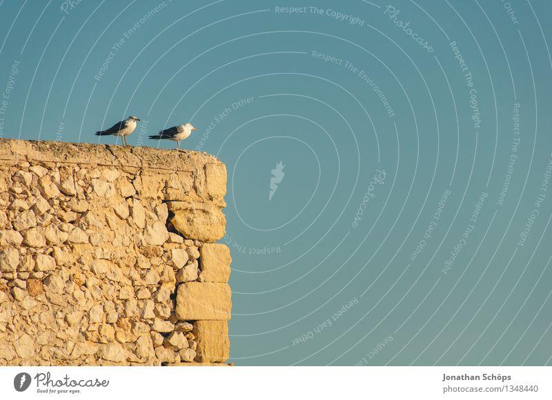 Îles de Marseille VIII Umwelt Natur Wolkenloser Himmel Sommer Schönes Wetter Tier Vogel 2 Tierpaar Partnerschaft Idylle Ehe Ehekrise Südfrankreich Frankreich