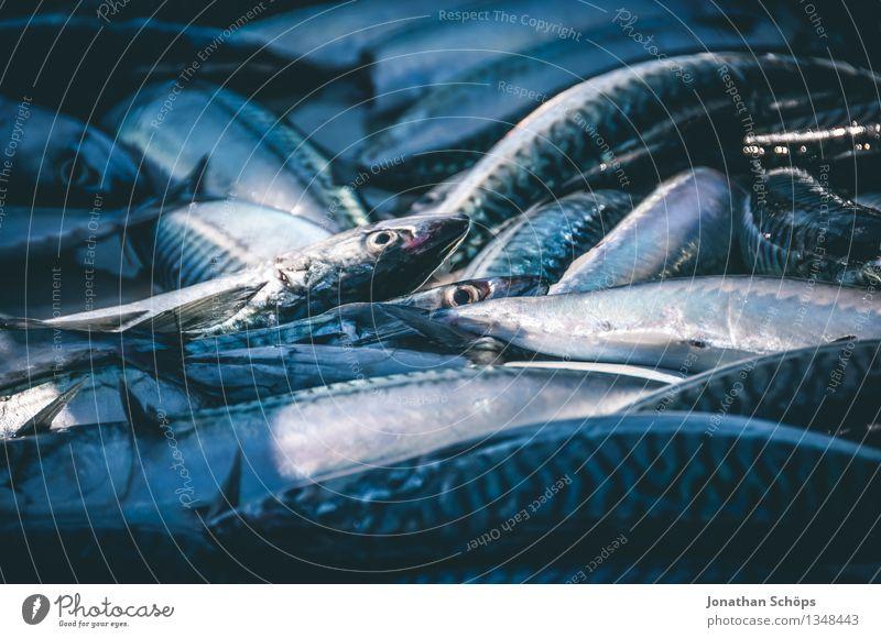 Fischers Fritze fischt frische Fische II Lebensmittel Fleisch Ernährung Mittagessen Abendessen Festessen Bioprodukte Klimawandel Totes Tier Tiergruppe Schwarm