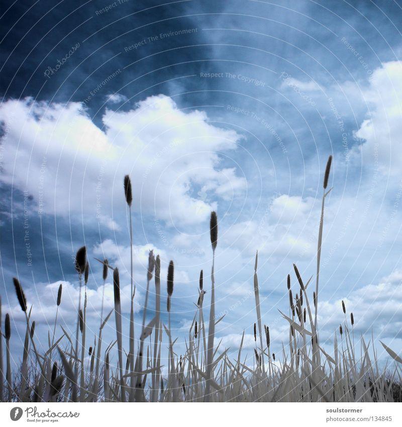 Wiesenleben in IR Personenzug Infrarotaufnahme Farbinfrarot Baum Holzmehl Gras Halm Wolken dunkel schwarz weiß hell-blau Wolkenhimmel Umweltschutz Natur