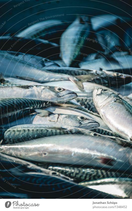 Fischers Fritze fischt frische Fische I Lebensmittel Fleisch Ernährung Mittagessen Abendessen Festessen Bioprodukte Klimawandel Totes Tier Tiergruppe Schwarm