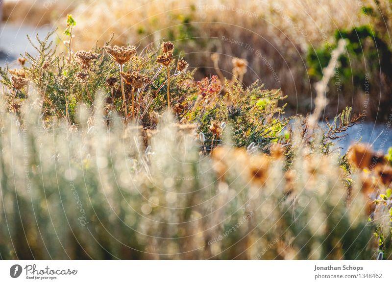 Îles de Marseille VI Natur Ferien & Urlaub & Reisen Pflanze Sommer grün Landschaft Erholung Berge u. Gebirge Umwelt Wärme Wiese braun Stimmung Felsen Park Feld