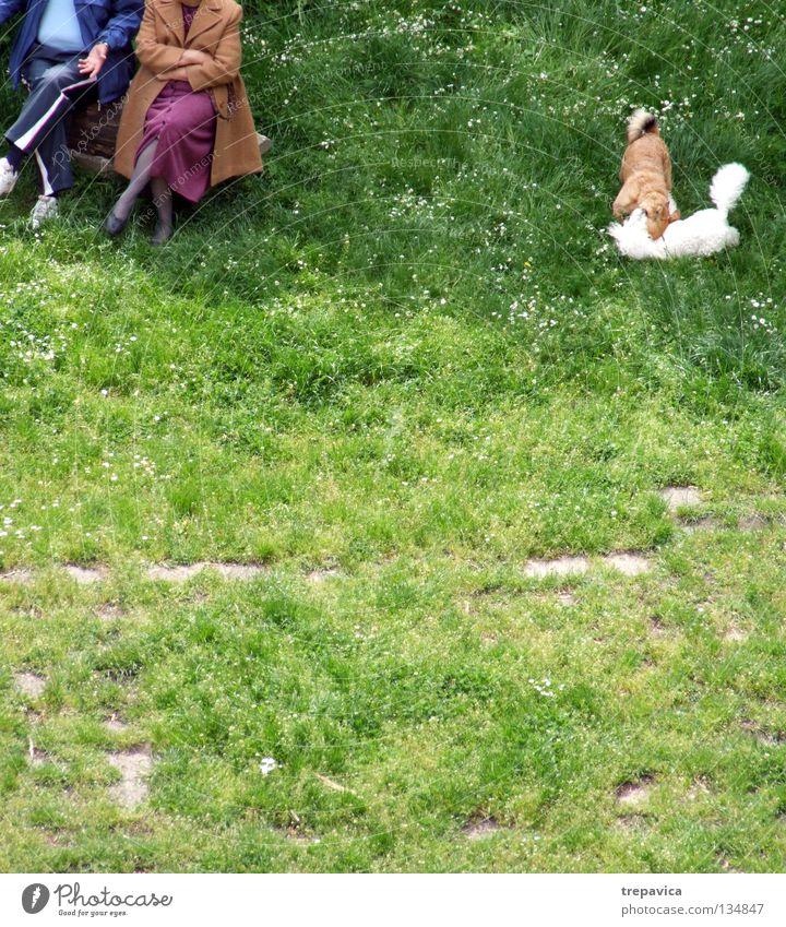 ... verheiratet... Frau Mann alt grün Freude Tier Erholung Wiese Hund Spielen Senior Gras Frühling Paar Freundschaft 2