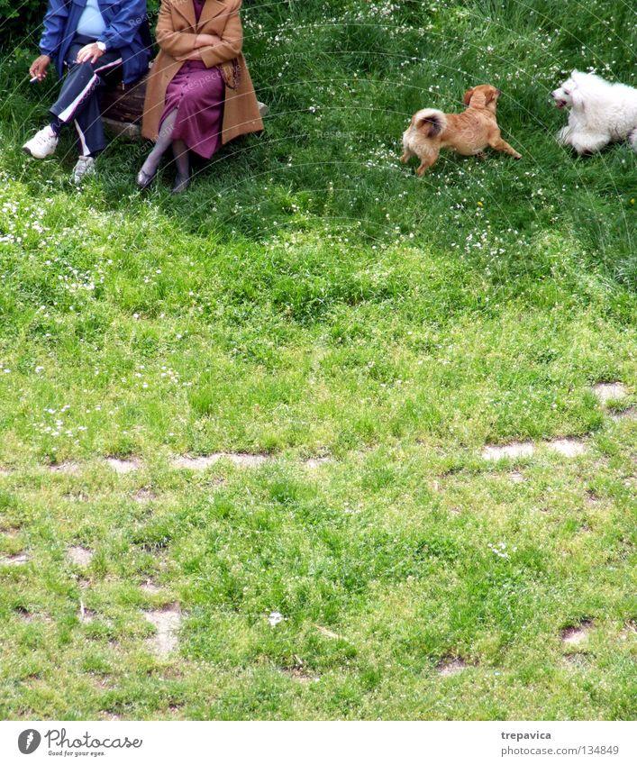 ... verheirater I... Frau Mann alt grün Freude Tier Erholung Wiese Hund Spielen Senior Gras Frühling Paar Freundschaft 2