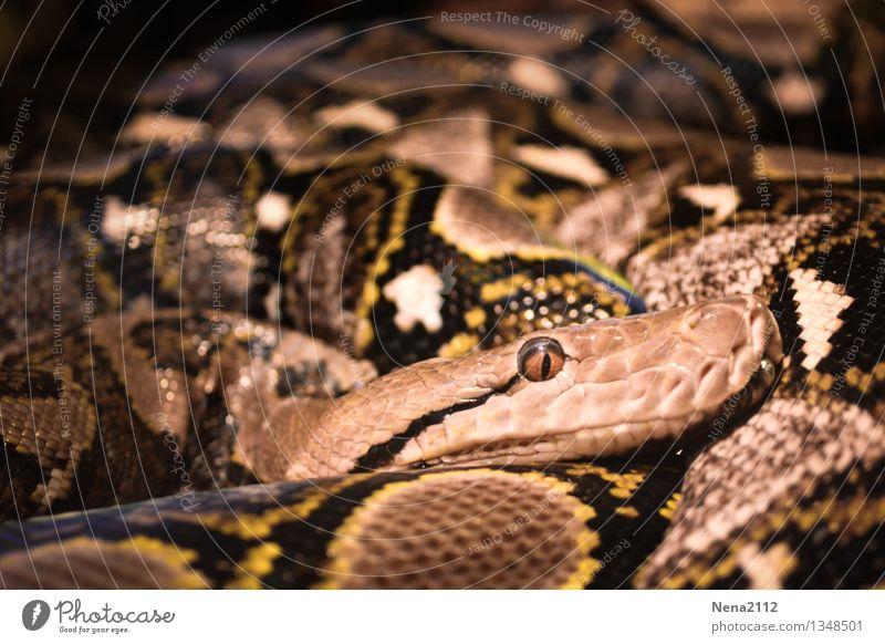 Endlos Natur Tier 1 Aggression bedrohlich Ekel exotisch groß Unendlichkeit gruselig hässlich kalt lang muskulös rund Tierliebe Angst Todesangst gefährlich