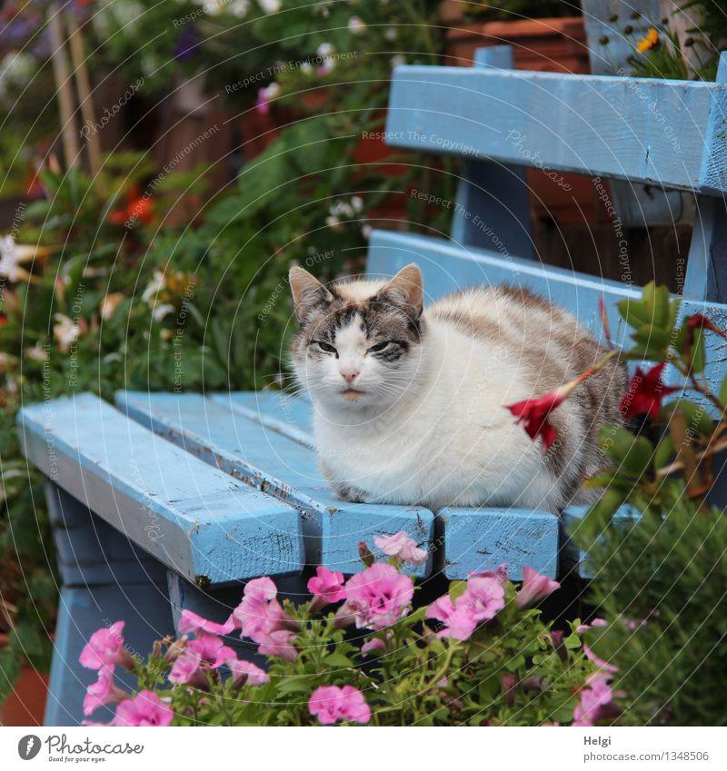 chillen... Umwelt Natur Pflanze Tier Herbst Schönes Wetter Blume Blatt Blüte Garten Haustier Katze 1 Bank Holz Blühend Erholung sitzen ästhetisch schön