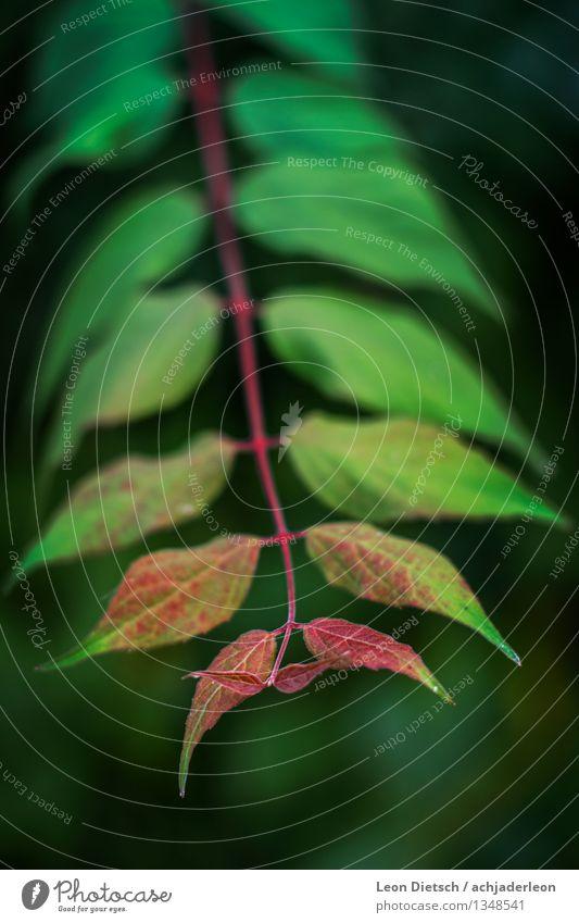 Generationen Natur Pflanze Frühling Sommer Sträucher Blatt Grünpflanze ästhetisch dünn frisch weich blau grün rot Farbfoto Außenaufnahme Nahaufnahme