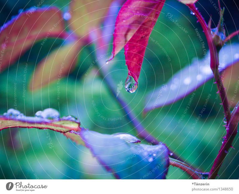 Regentropfen Natur Pflanze blau grün schön Wasser rot Einsamkeit Blatt ruhig Leben Traurigkeit Herbst natürlich Garten
