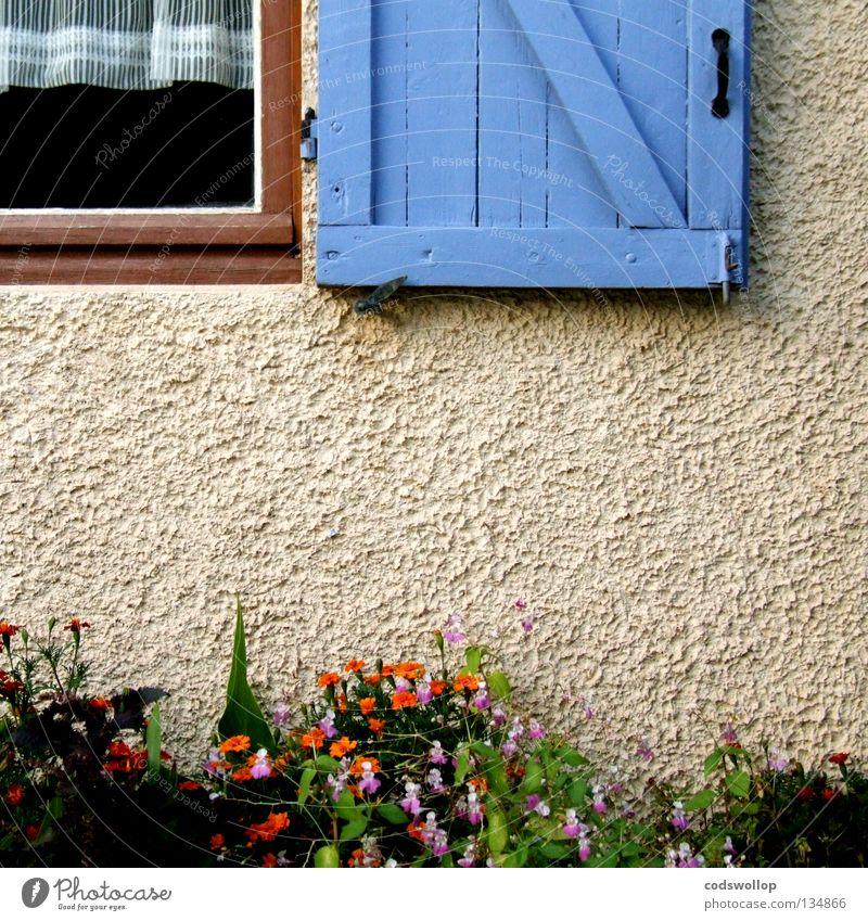le gymnase de marie Fensterladen Provence Vorhang Frankreich Scharnier Fensterrahmen Detailaufnahme Haushalt garden hinge curtains orange oeillet window flowers