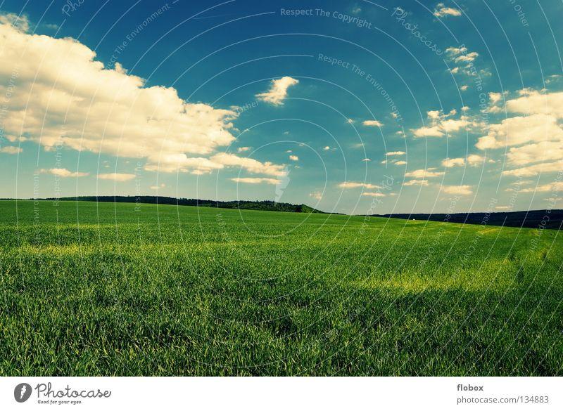 Greenish Feld Ackerbau Landschaft Natur Ferne Wolkenhimmel Wolkenfeld Wolkenfetzen Wolkenformation Schönes Wetter himmelblau weiß grün malerisch Menschenleer