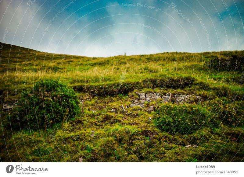 Es grünt so grün... Himmel Natur Ferien & Urlaub & Reisen Pflanze blau Baum Blume Landschaft Ferne Wald Berge u. Gebirge Umwelt Wiese Gras Felsen