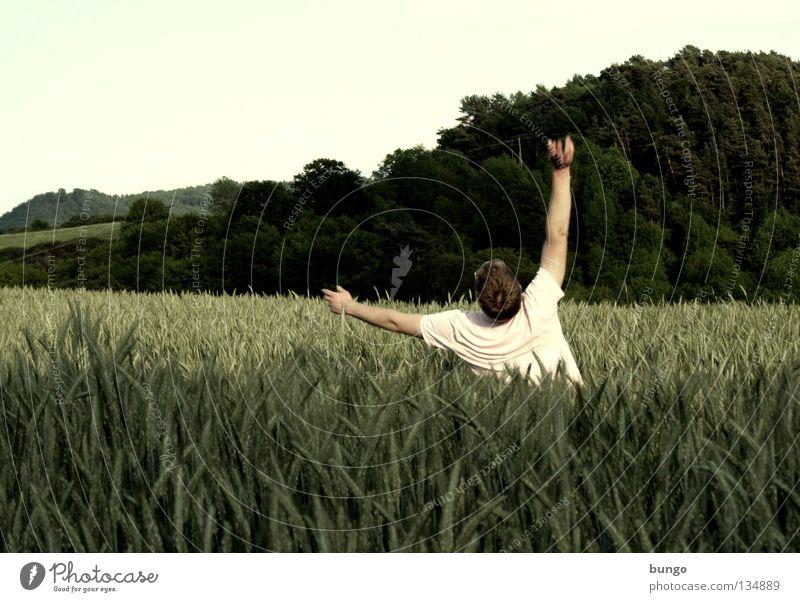 marcus custodiam amittit Mensch Mann Feld fallen Getreide berühren Sturz dumm Weizen Dummkopf geradeaus Weizenfeld tollpatschig