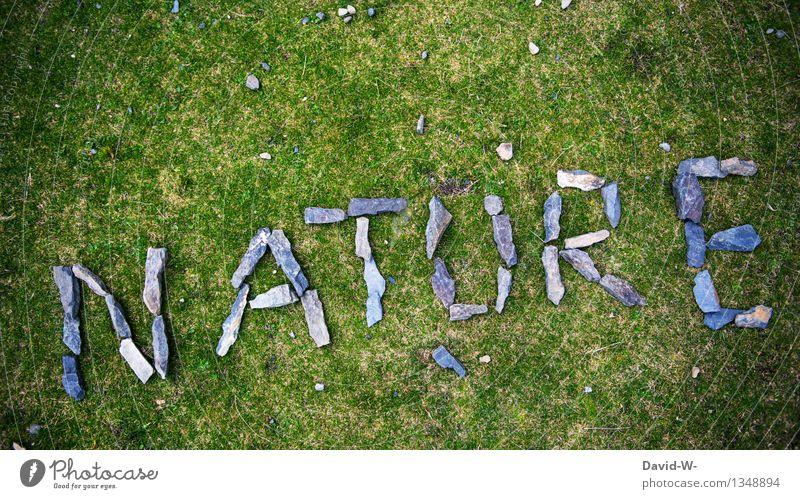 Natur Pur Natur grün Sommer Landschaft ruhig Umwelt Herbst Wiese Gras Kunst Stein Zufriedenheit Kraft Energie Zukunft fantastisch