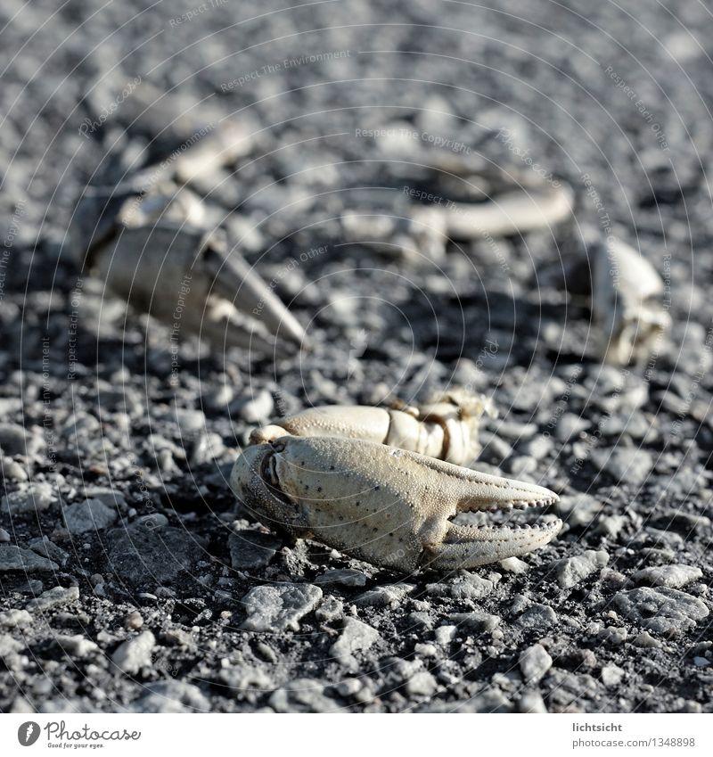 Möwenpicknick Natur Meer Tier Küste Stein Insel kaputt Teile u. Stücke Nordsee Fressen Rest Krallen Wattenmeer Schere Panzer