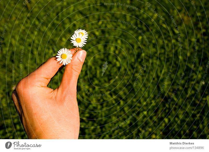 Verspätetes Muttertagsgeschenk Mensch Hand Sommer Blume Wiese Gefühle Blüte Frühling Haut 3 Finger Geschenk Rasen festhalten Freundlichkeit Ernte