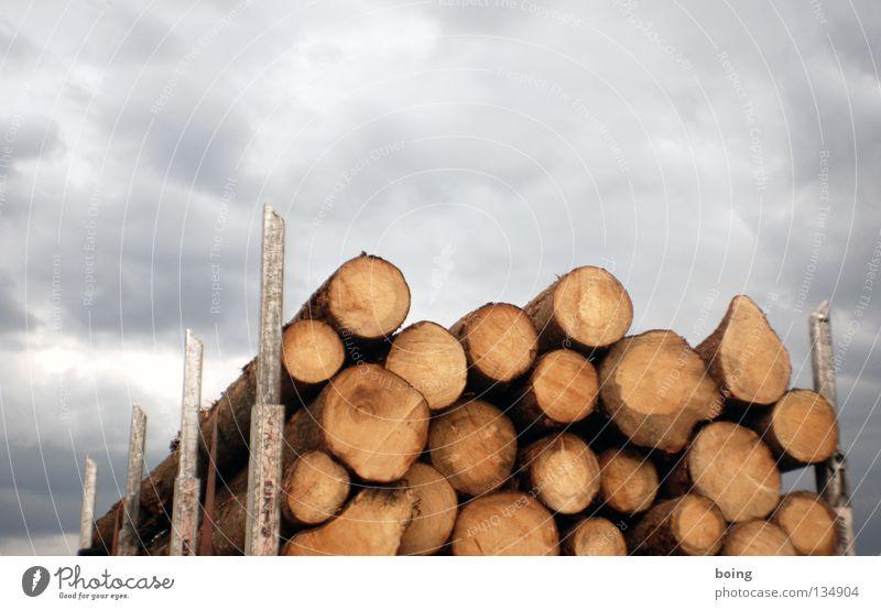 Maibaumstehlen Fichte Forstwirtschaft Lastwagen Holzfäller Kettensäge Papierherstellung Abholzung Jahresringe Waldbrand Baum Ware Verkehr Holztransport Vollholz