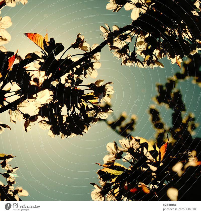 Blütenmeer Natur schön Himmel Baum Sonne grün blau Pflanze Freude Blatt Wolken Farbe Blüte Bewegung Frühling Wärme