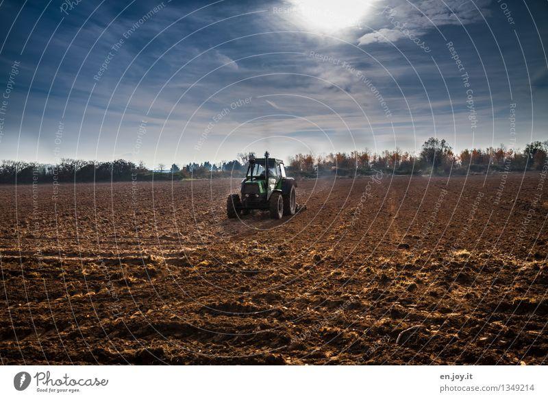 Männertraum Himmel Natur blau Gesunde Ernährung Landschaft Umwelt Frühling Herbst Gesundheitswesen braun Arbeit & Erwerbstätigkeit Feld Wachstum Erde Klima
