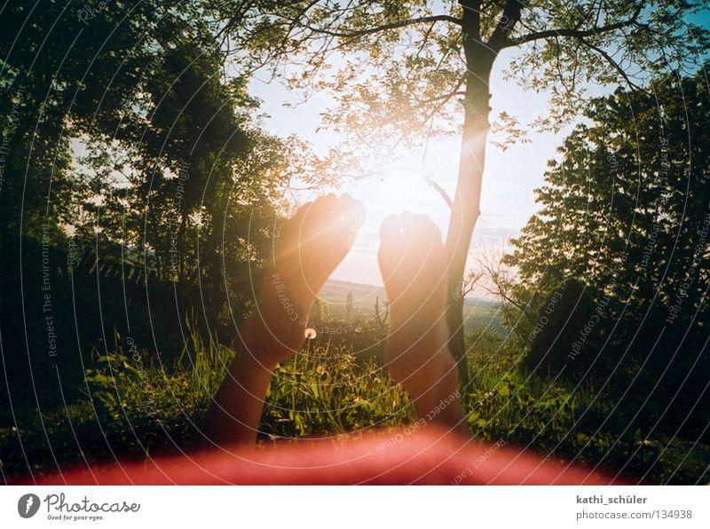 Spätsommer Sonne Wiese Hippie Erkenntnis Indian Summer Natur Erholung Fuß Park grün Baum Sommer