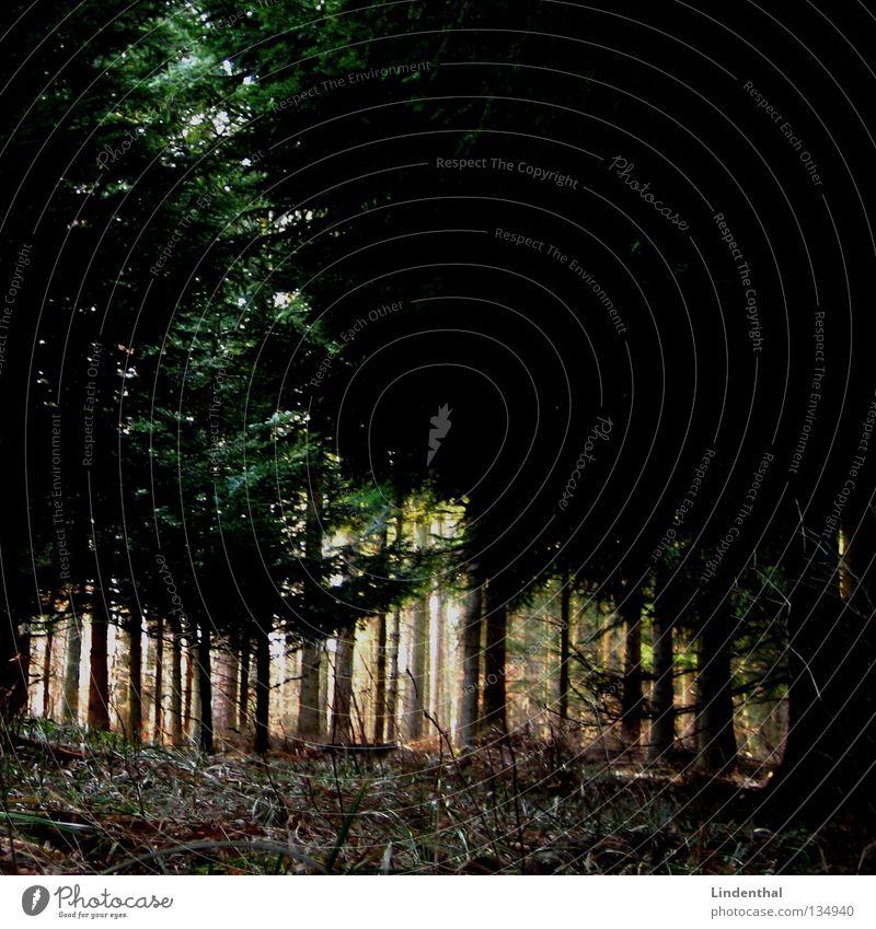 Licht in Sicht Wald Baum Unterholz Angst hilflos dunkel Nacht gruselig Panik verfolgen Waldboden Gras laufen Einsamkeit ruhig Entführung Geäst Sturz Spaziergang