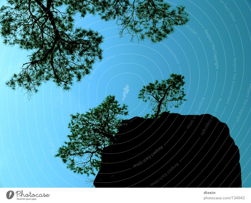 Aufwärts Sträucher Baum Blatt Sandstein Gegenlicht steil vertikal Pfälzerwald Rheinland-Pfalz wandern Aussicht Berge u. Gebirge Felsen Himmel blau Ast Klettern
