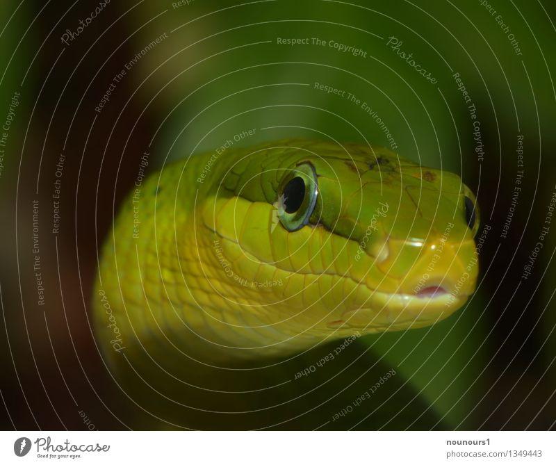 Hey You grün Tier kalt außergewöhnlich Wildtier fantastisch bedrohlich nah gruselig Jagd exotisch Tiergesicht Zoo Ekel Schlange Schuppen