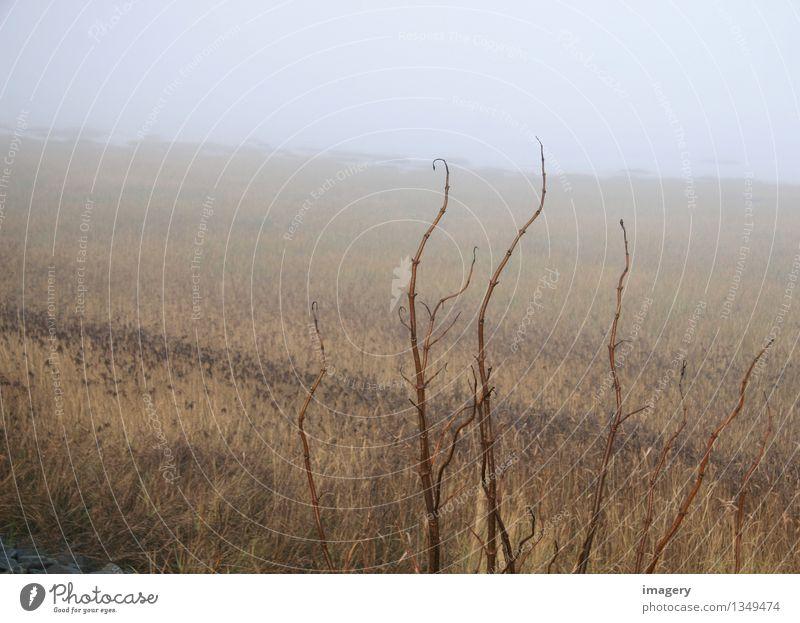 Herbstmeer ruhig Meditation Meer Natur Landschaft Tier Nebel Küste atmen beobachten entdecken Erholung braun Einsamkeit Ferien & Urlaub & Reisen Farbfoto