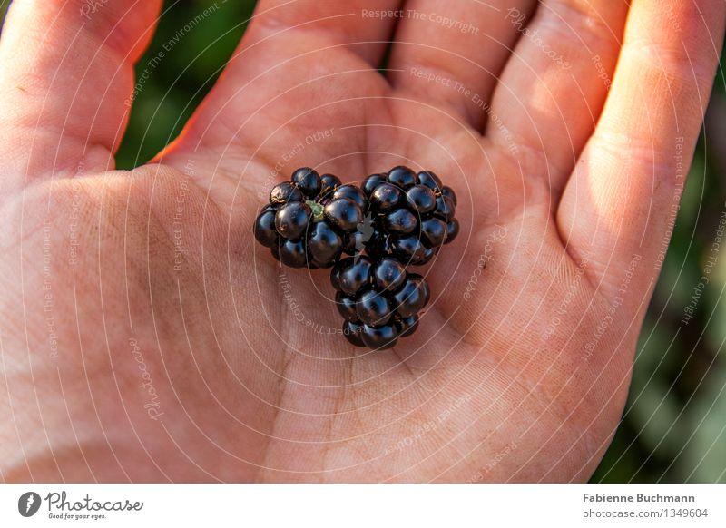 wilde Brombeeren Lebensmittel Frucht Samen Wildpflanze Natur Gesundheit Gesunde Ernährung Hand Finger blau grün orange rosa schwarz dreckig festhalten glänzend