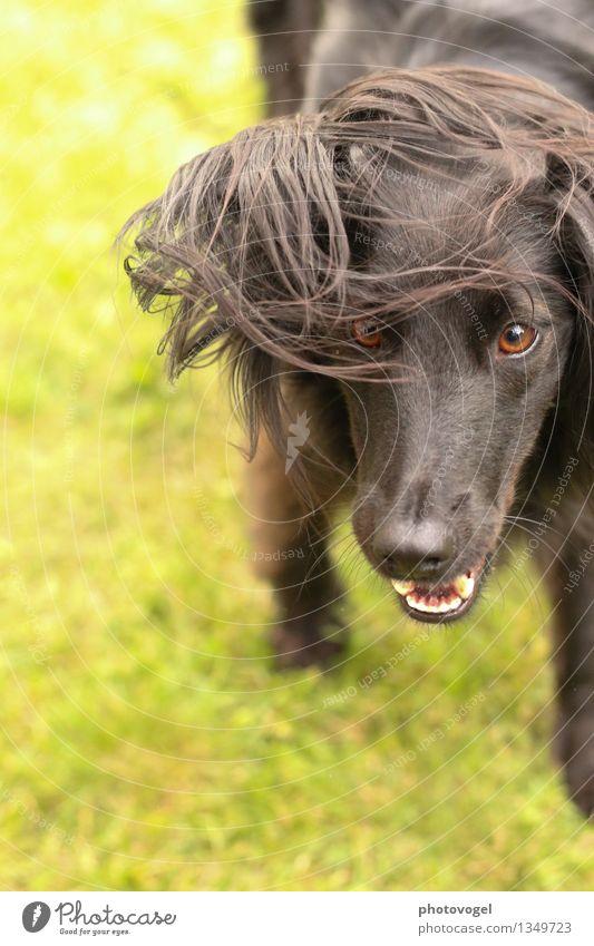 Wildling Erde Gras Wiese Tier Haustier Hund Tiergesicht Fell 1 frech wild grün schwarz Freude Leben Energie Entschlossenheit Farbfoto Außenaufnahme Tag