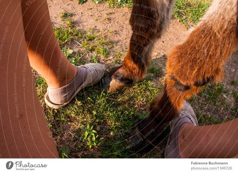 Freunde Beine Fuß 1 Mensch Sand Sommer Gras Strümpfe Schuhe brünett Tier Fell Esel Unpaarhufer Huf Zusammensein braun grün orange rosa weiß Zusammenhalt