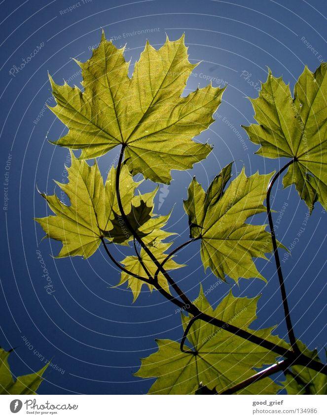 frühling Himmel Baum grün Sommer Blatt Wolken gelb Frühling Park Wärme Ast Schönes Wetter Zweig Gefäße