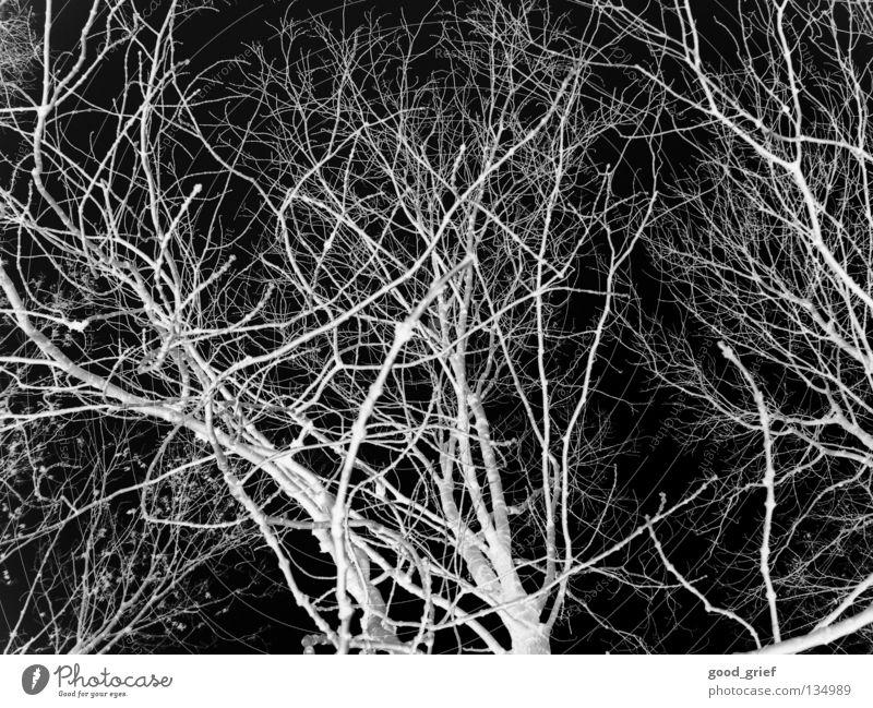 dark wood weiß Baum Winter Blatt schwarz Wald dunkel grau Angst Ast Panik Zweig unheimlich Holzmehl