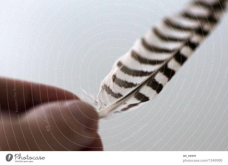 Loslassen Hand Finger Tier Luft Vogel Feder berühren festhalten fliegen ästhetisch authentisch einfach exotisch frei einzigartig maritim nachhaltig natürlich