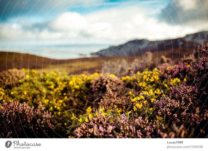 Bodenbewuchs Ferien & Urlaub & Reisen Umwelt Natur Landschaft Pflanze Wolken Sonne Klima Wetter Schönes Wetter Blume Gras Sträucher Moos Grünpflanze Wiese Feld