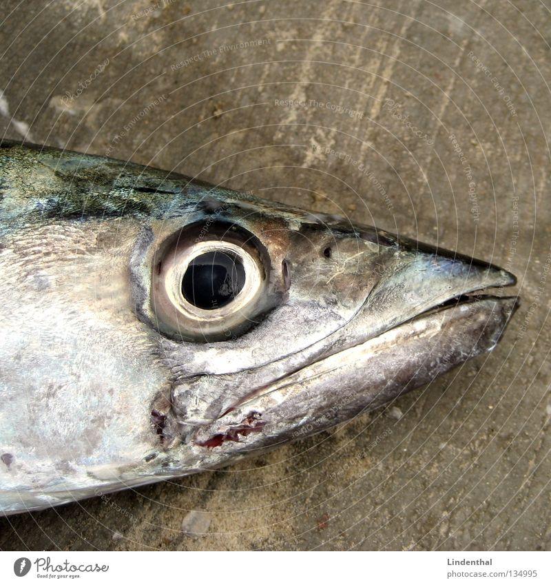 FISHEYE Tod Scheune Mund Maul Glätte Fischauge Auge