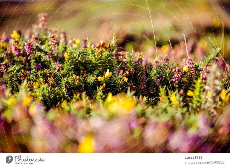 Blumen, Stacheln und Sträucher Umwelt Natur Landschaft Pflanze Erde Sonne Sonnenaufgang Sonnenuntergang Sommer Klima Schönes Wetter Gras Moos Blatt Grünpflanze