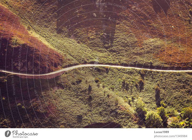 Der einzige Weg wandern Umwelt Natur Landschaft Pflanze Baum Gras Sträucher Wiese Wald Hügel Berge u. Gebirge Wege & Pfade Straße Ausweg ausweglos gerade Kurve