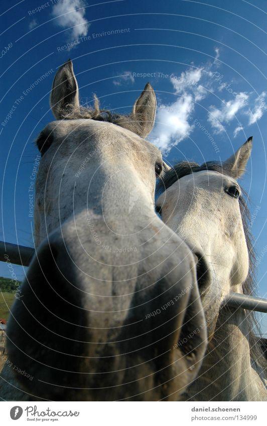lecker neue Kamera Himmel Ferien & Urlaub & Reisen blau grün schön Sommer Wolken Tier Umwelt Auge Wiese Gras Freizeit & Hobby Wetter Tierpaar paarweise