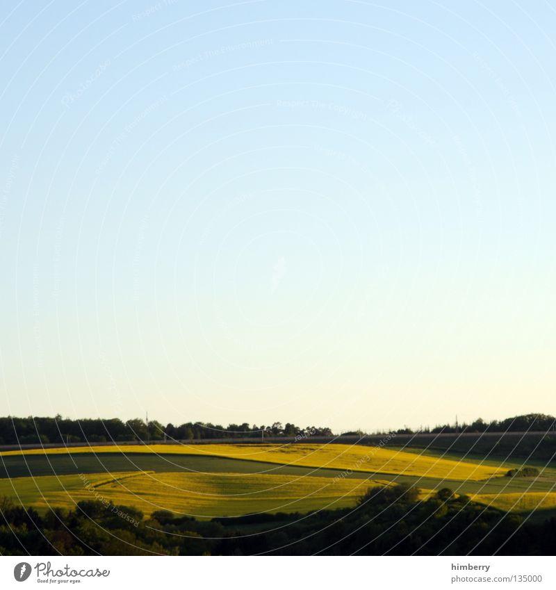 yellow outlook Raps Pflanze Benzin Diesel Biodiesel Feld Blüte gelb Landwirtschaft Hügel Wald Baum Natur Dämmerung Horizont Himmel Panorama (Aussicht) Sommer