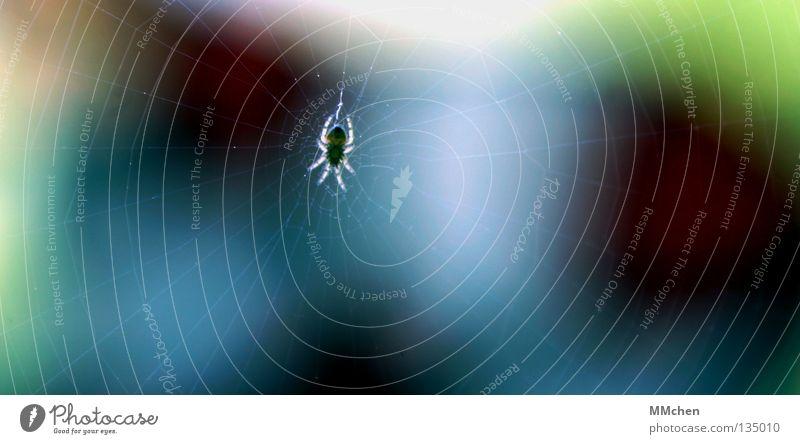 SpiderMan Tier Beine Angst warten beobachten Vergänglichkeit Netz Insekt fangen erleuchten Ekel 8 Spinne Nähgarn Dieb Spinnennetz