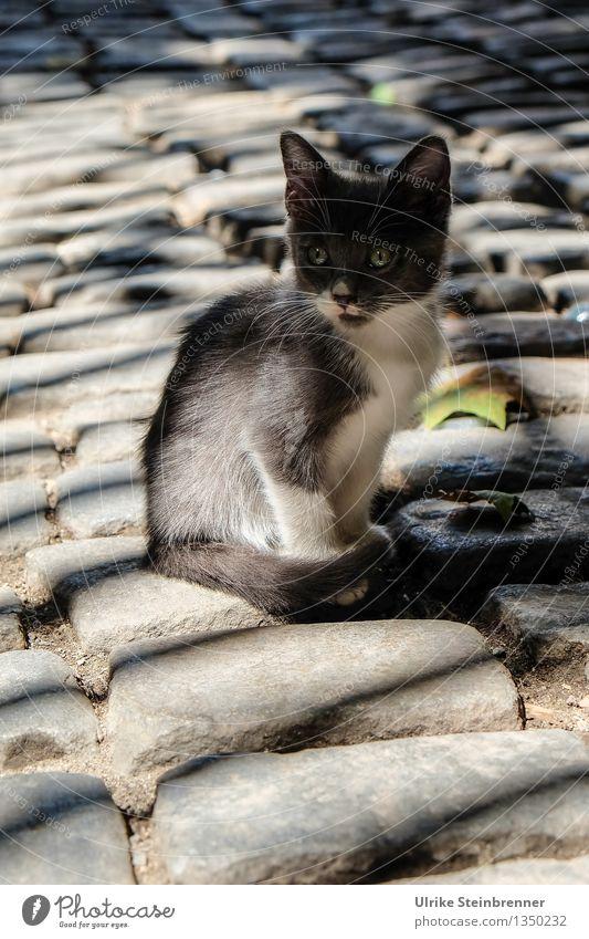 Little Princess of Bosporus Katze Stadt weiß Tier Tierjunges Straße grau Tourismus sitzen warten Platz beobachten niedlich planen Neugier Gelassenheit