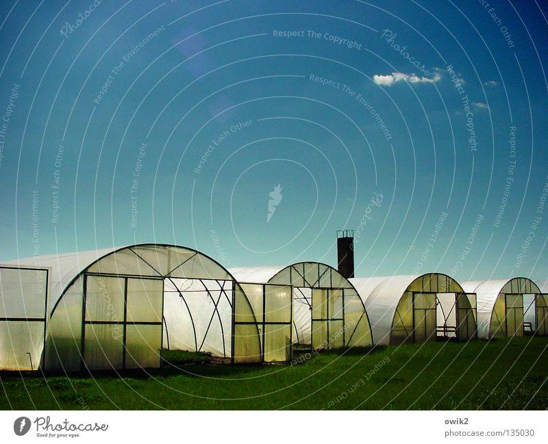 Plastikbunker Natur Pflanze Sommer Wolken Frucht Luft Wachstum Erde offen Schönes Wetter Landwirtschaft Bauwerk Gemüse Kunststoff Ackerbau Statue