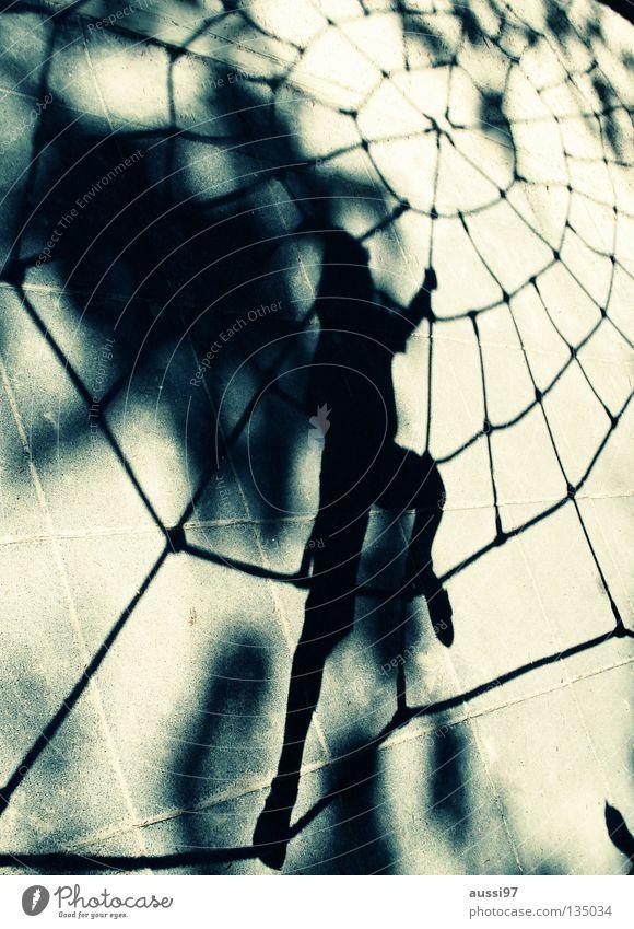 Arachnoid Spinne Spielplatz Kind Spinnenetz Bewegungsdrang Superhelden Netzt Spider schwarze Witwe