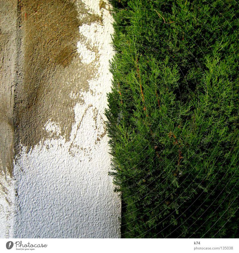 Ecke alt weiß grün Wand Garten Mauer Park kaputt Verfall Verkehrswege Zaun Putz Hecke Reparatur Grundstück