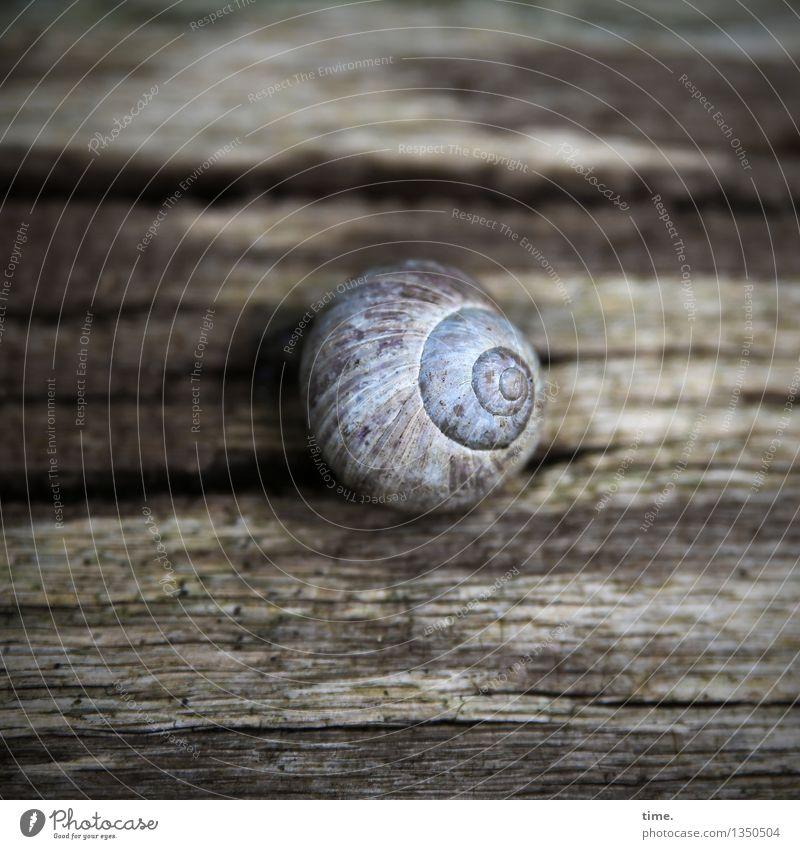 Textur | Lebenslinien Baum Schnecke Schneckenhaus Holz Kugel Linie Erholung sitzen dunkel natürlich Zufriedenheit Schutz Verschwiegenheit Zusammensein geduldig