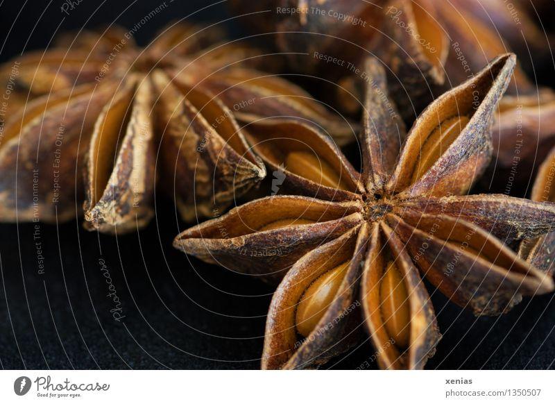 Makroaufnahme von Sternanis Kräuter & Gewürze Asiatische Küche Duft braun schwarz Illicium verum Weihnachten & Advent ätherisches Öl Anisstern