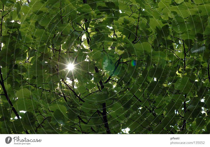 ein Funkeln Blatt Baum Strahlung Licht Sonnenstrahlen glänzend hell Sommer Leichtigkeit Beleuchtung blenden schimmern Physik grün Fröhlichkeit leicht angenehm