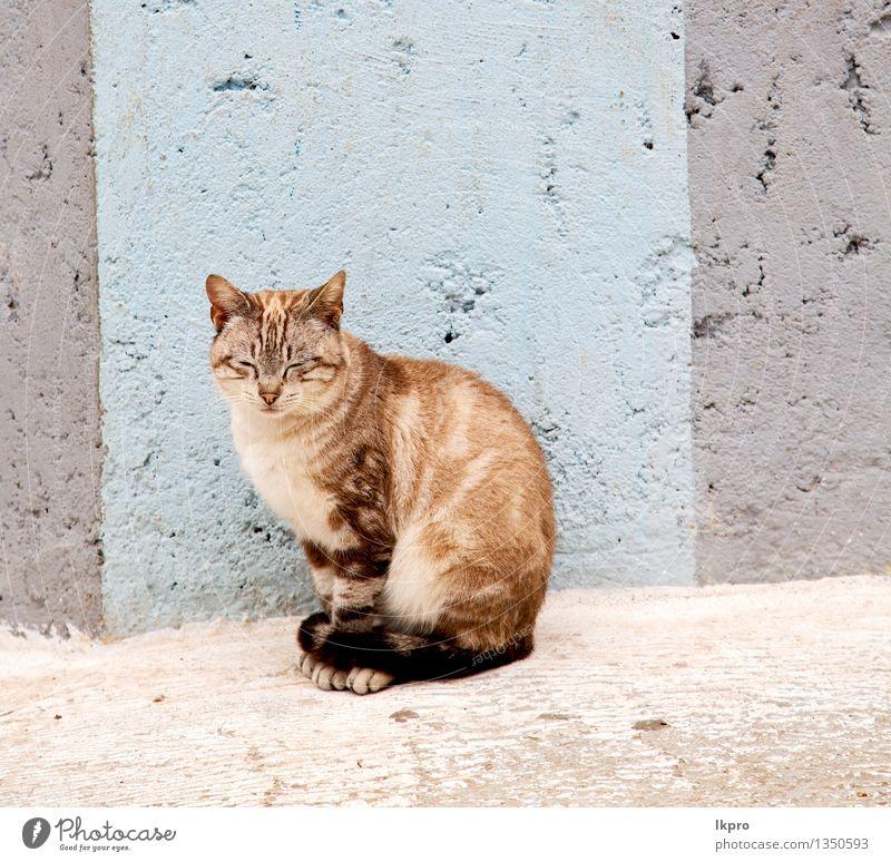 Marokko und Haus Hintergrund Katze Natur Mann schön Sommer weiß Erholung rot Einsamkeit Tier Gesicht Erwachsene Straße klein grau