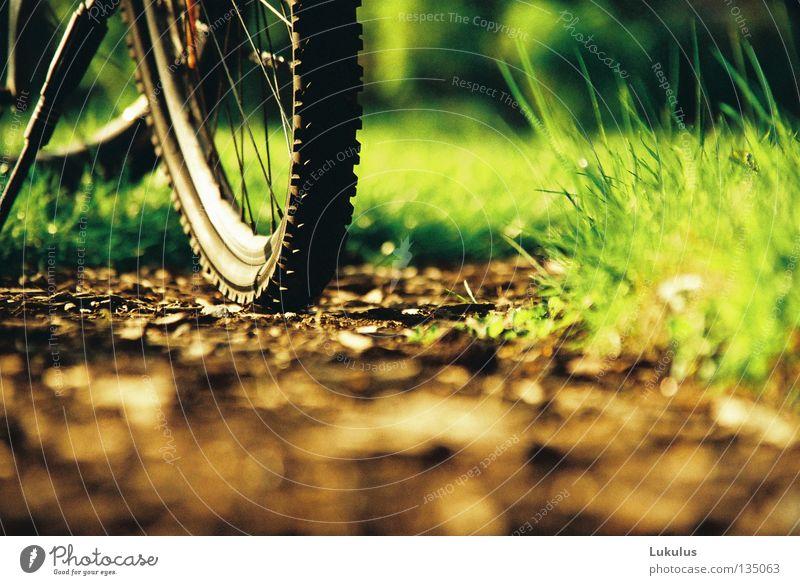 Sommer grün Ferien & Urlaub & Reisen Erholung Gras Garten Wege & Pfade Park braun Fahrrad Wohnung Gesellschaft (Soziologie) Speichen Abendsonne Felge